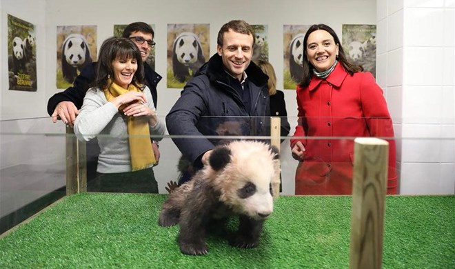 French president Macron celebrates birthday with panda cub Yuan Meng