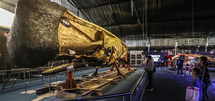 """""""Legend of giant whale"""" exhibition opens to public in Dalian"""