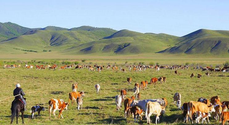 Herdsmen of Jarud Banner keep tradition of migrating to summer campsites with livestocks